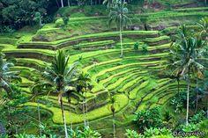 Best Places to Visit in Bali – Mount Batur, Ubud, Jimbaran and Lovina