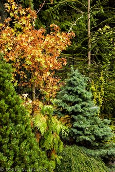 A mix of evergreen and deciduous foliage
