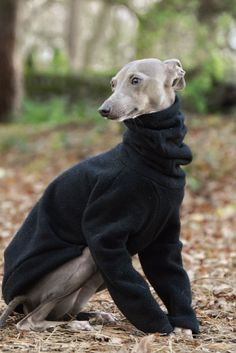 So wärmen Sie Ihren Lieblingshund: 32 Fotoideen Whippet Puppies, Dogs And Puppies, Whippets, Doggies, Baby Animals, Cute Animals, Baby Elephants, Wild Animals, Italian Greyhound Clothes