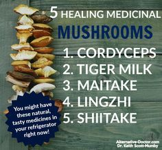 """Find out the healing benefits of five medicinal mushrooms. Now these aren't the toadstools growing in the damp part of your garden or the """"magic"""" mushrooms your uncle took back in college. Holistic Medicine, Natural Medicine, Herbal Medicine, Chinese Medicine, Health Benefits Of Mushrooms, Mushroom Benefits, Cancer Fighting Foods, Cancer Foods, Tips"""