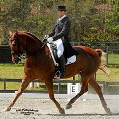 Dressage Exercises for Any Horse, Part 1