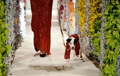 Annual Fashion for Paws event in Washington