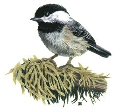Chickadee Needle Painting Embroidery Kit - a Hand Embroidery Design as an Alternative to Cross-stitch.