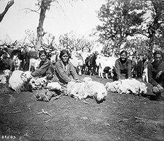 Les femmes Navajo tonte des moutons.
