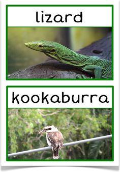 Australian Animals Photo Set - Treetop Displays - EYFS, KS1, KS2 classroom display and primary teaching aid resource