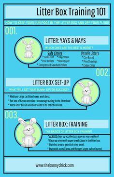 Litter Box Training for Rabbits 101!