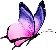 real purple butterflies flying - Google Search