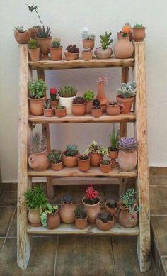 Cactus em prateleiras para um pequeno jardim!