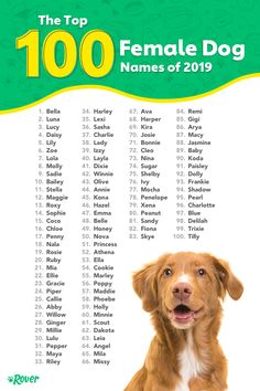 These are the top female dog names of As the world's largest network of pet sitters and dog walkers and leading dog name experts, we can't wait each year to dig into our… Most Popular Dog Names, Best Dog Names, Cat Names, Top Dog Names, Cute Puppy Names, Cute Names For Dogs, Cute Puppies, Cool Dog Names Girls, Female Puppy Names Unique