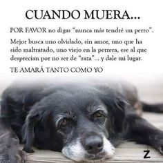 Que sad 😭 Love Pet, I Love Dogs, Cute Dogs, Animals And Pets, Baby Animals, Cute Animals, Baby Dogs, Doggies, Dog Quotes