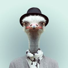 Animals Portraits by Yago Partal | Cuded