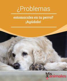 ¿Problemas #estomacales en tu perro? ¡Ayúdalo!  Dicen que hay #razas más propensas que otras a tener #problemas estomacales. Sin embargo, son muchos los #perros que pueden tener el estómago delicado por otras razones que nada tienen que ver con la raza.