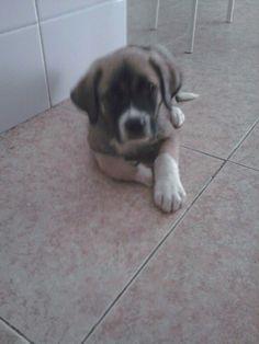 mi perro con 2 meses