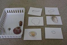 Seashell Matching! Sensory and cognitive.