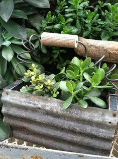 Corrugated metal planter - love this. A piece of branch would be a cute handle too ... in place of a dowel