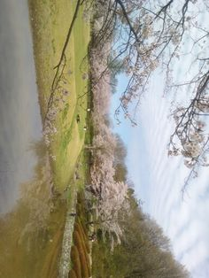 Srtificial pond and blossoms