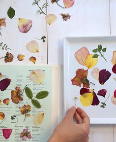 DIY pressed rose petal tray - Say yes Pressed Roses, Dried And Pressed Flowers, Pressed Flower Art, Dried Flowers, Fresh Flowers, Diy Crafts To Do, Diy Projects To Try, Craft Projects, Rose Petals Craft