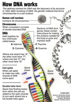 How DNA Works.
