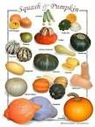 Winter Squash Guide   Co+op, welcome to the table Pumpkin Soup, Pumpkin Carving, Winter Squash Varieties, Sweet Dumplings, Apple Orchard, Feeding A Crowd, Green And Orange, Easter Eggs, The Cure