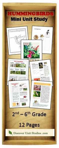 Hummingbirds are amazing and beautiful. With so many unique characteristics, your child will be amused at all the strange abilities of these birds. This mini unit study incorporates all learning styles. It is a ten-page document that includes a fun & colorful article for kids about hummingbirds. This article is filled with detailed photos and fun facts about this species which will keep them engaged as they improve their reading skills.