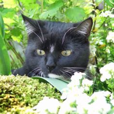 How to Keep Cats from Pooping in Flower Beds