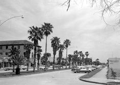 City view with palm trees on median - Venice, Florida. Vintage Florida, Old Florida, Florida Usa, Venice Florida, Venice Beach, Florida Images, Chicago Photos, Beautiful Beaches, Great Places