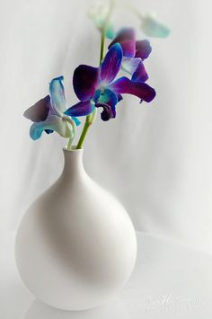 Orchids purple blue and turquoise  8x12 Fine by HPaquinPhotography, $20.00