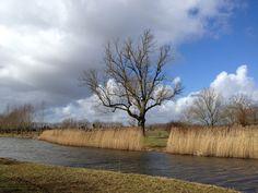 Schellerlanden. Aan de rand van Zwolle Foto Siep van der Veen