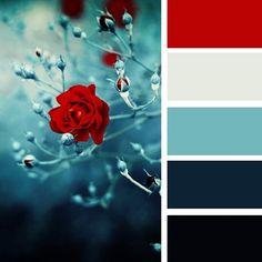 сочетание красного цвета с другими цветами: 21 тыс изображений найдено в…