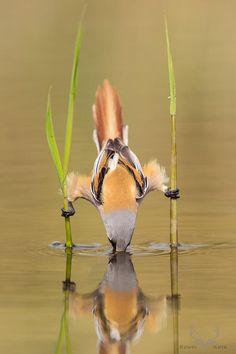 Fischender Vogel | isnichwahr.de