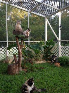 Novo produto para manter os gatinhos seguros em seus lares – Gatos, Gatil e Gatices =^. Animal Room, Outside Cat Enclosure, Cat Ideas, Cat Fence, Cat Cages, Cat Run, Cat Playground, Cat Garden, Outdoor Cats