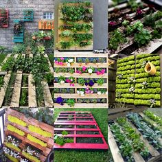 SMMSDesign: Palate, Palette, and Pallet Gardens