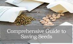 Survival Seeds 101: A Comprehensive Guide For Saving Seeds | Prepper Universe
