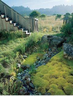 fascinating mix of grasses and succulents