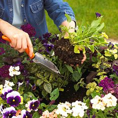Basic Planting Guide: What You Need to Know to Start Your First Garden Use this planting guide to get started with your first garden. If you've never planted a garden before, now is the time! (Actually spring and fall are the best seasons to plant, but you can get excited about gardening year-ro
