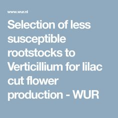 Selection of less susceptible rootstocks to Verticillium for lilac cut flower production - WUR