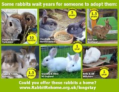 Can you home some of the rabbits that have been waiting a long time for a home? Rabbit Rehome UK allows rescue centres and individuals to enter details of rabbits in need of new homes. Rabbit lovers can then search for rabbits to adopt. We are not organising 'adoptions online' you will need to contact the rescue centre to find out about their homing policy. This site is not intended for breeders to advertise deliberately breed litters or for breeders to find 'stock'