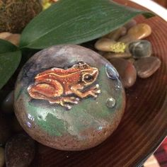 Hey, I found this really awesome Etsy listing at https://www.etsy.com/listing/234171684/coqui-tropical-tree-frog