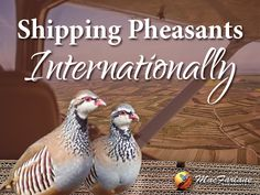 The steps to shipping pheasants internationally.