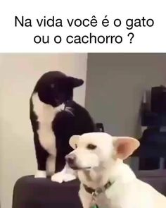 536 Best Vídeos engraçados images in 2020 Funny Vidos, Funny Jokes, Hilarious, Jung So Min, Memes Humor, Black Cat Anime, Wow Video, Funny Animals With Captions, Animal Jokes