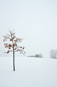 Canadian Girls, I Love Winter, O Canada, Snowy Day, Places Of Interest, How Beautiful, Vignettes, Winter Wonderland, Natural Beauty