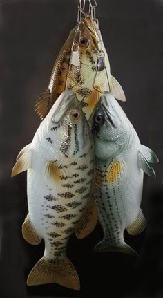 1000 images about seafood display 39 s on pinterest for Is tilapia a fake fish