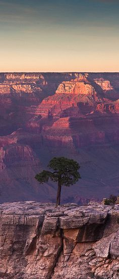 Lone tree atop the Grand Canyon in northern Arizona. Beautiful places in the usa Parc National, National Parks, Parque Nacional Do Grand Canyon, Places To Travel, Places To See, Beautiful World, Beautiful Places, Parcs, Land Art