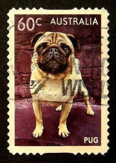 Pug Dog stamp - Australia