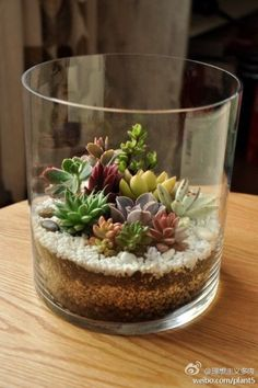Succulenten Idea with simple Tolle DIY Sukkulenten Dekoration - Einfach in ein IKEA Kerzen Glas mit weiße Steinen *** IKEA Candle Glass and white Stones - Love the simplicity of this Succulent terrarium. Succulent Arrangements, Cacti And Succulents, Planting Succulents, Planting Flowers, Succulent Centerpieces, Creative Flower Arrangements, Simple Centerpieces, Floral Arrangement, Succulent Gardening