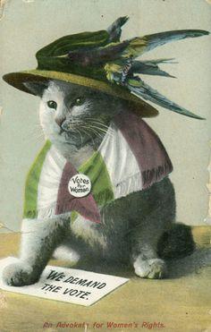 Cat in Hat