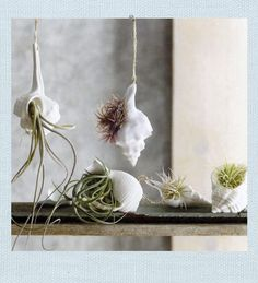 porcelain sea shell hanging planter $18
