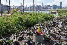 Urban Gardening: Managing Risks of Contaminated Soil | Environmental Health Perspectives NIH.gov