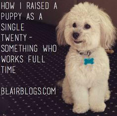 How I Raised a Puppy as a Single Twenty-Something Who Works Full Time | Blairblogs.com