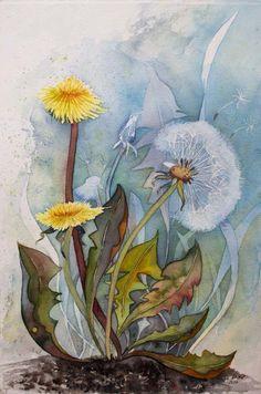 Pusteblumen – Immer wieder ein kleines Wunder (c) Aquarell von Frank Koebsch
